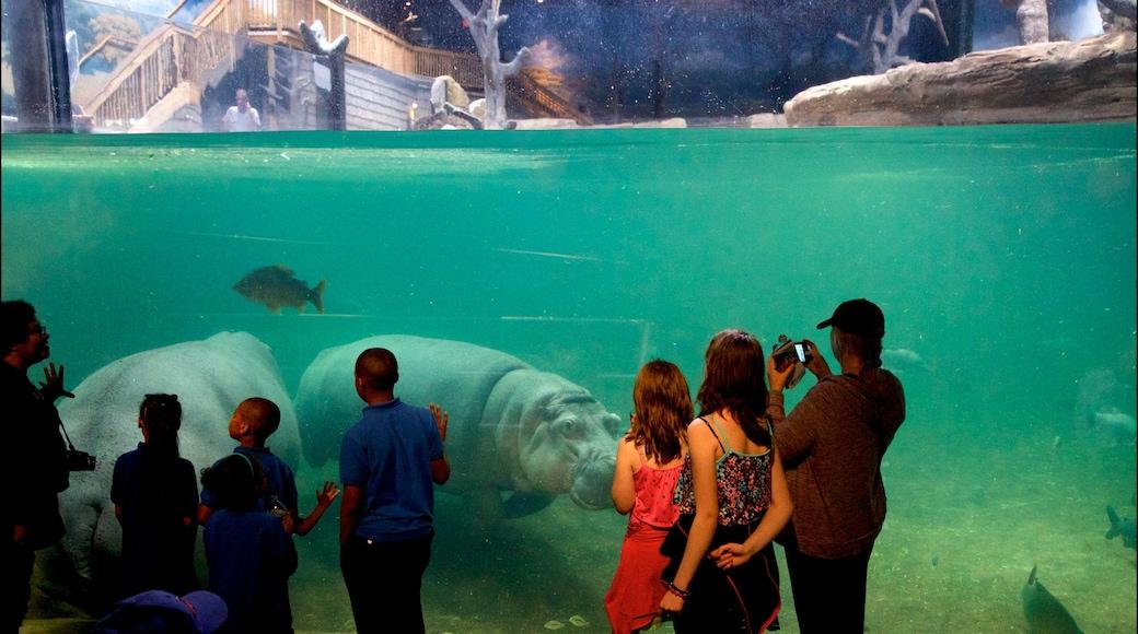 Adventure Aquarium que inclui vida marinha e vistas internas assim como um pequeno grupo de pessoas