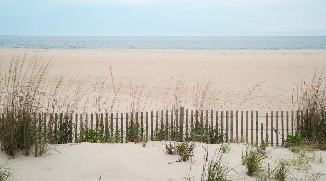 Cape May Point State Park showing general coastal views and a sandy beach