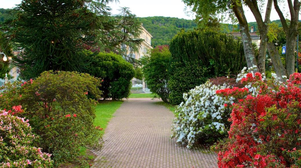 Stresa che include fiori di campo e giardino