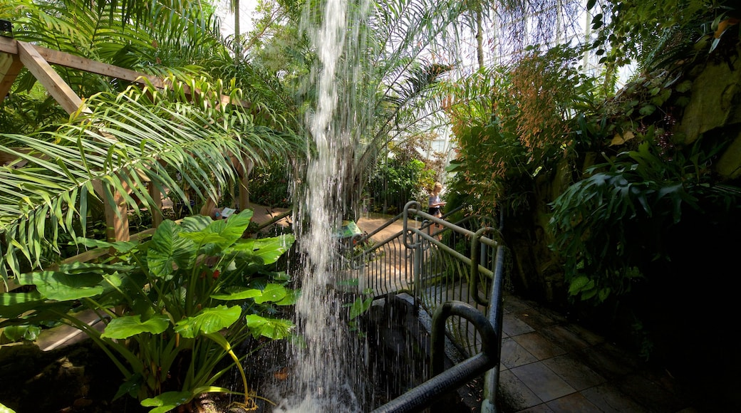 Myriad Botanical Gardens which includes a fountain, interior views and a park