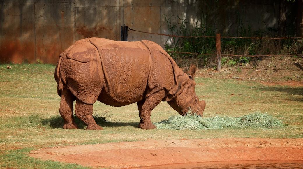 Oklahoma City Zoo showing dangerous animals, zoo animals and land animals