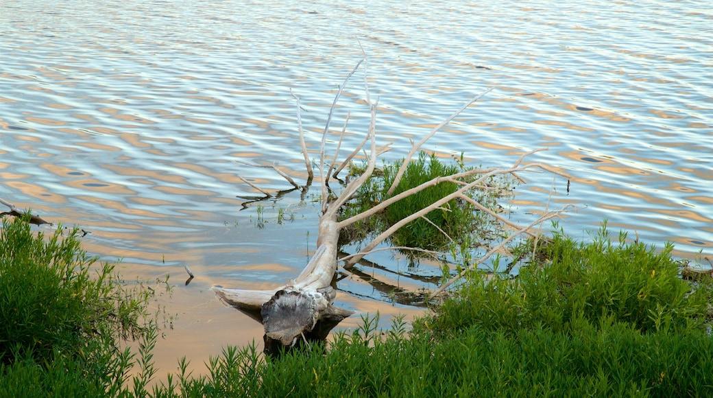 Veteran\'s Lake featuring a lake or waterhole