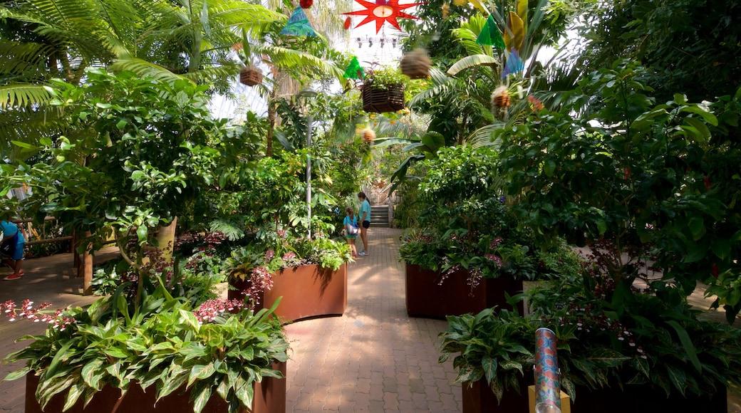 Myriad Botanical Gardens featuring a park