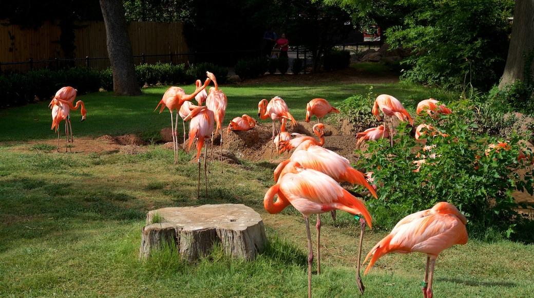 Oklahoma City Zoo featuring bird life and zoo animals