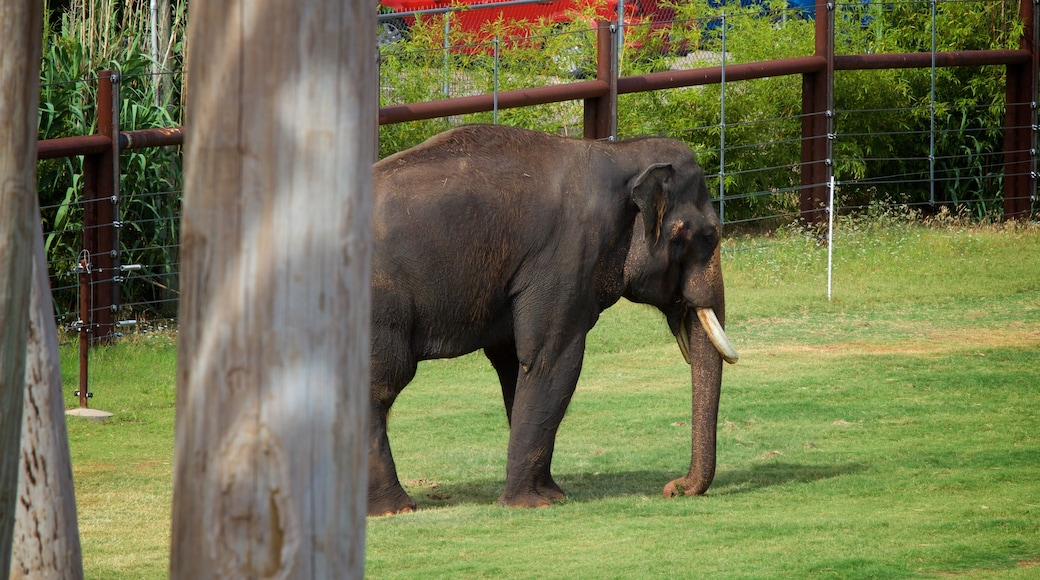 Oklahoma City Zoo which includes zoo animals and land animals