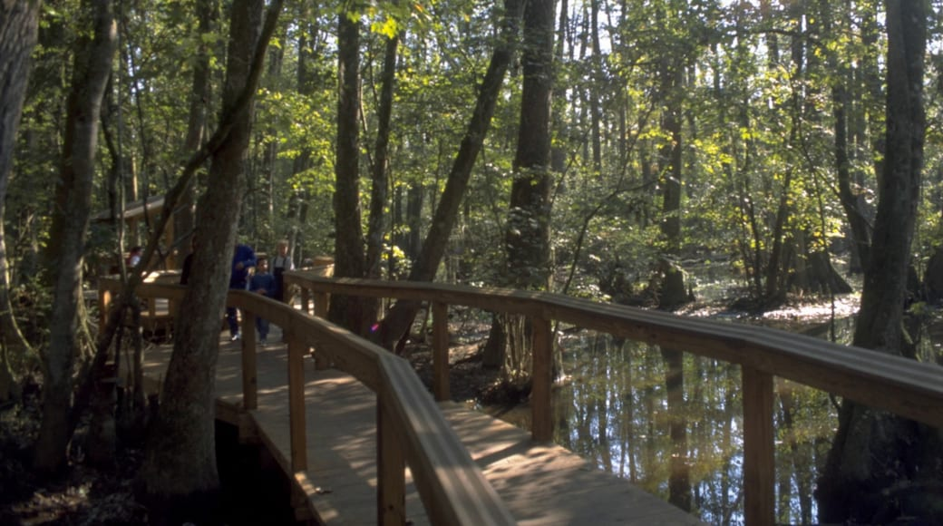 Baton Rouge which includes a garden, hiking or walking and landscape views