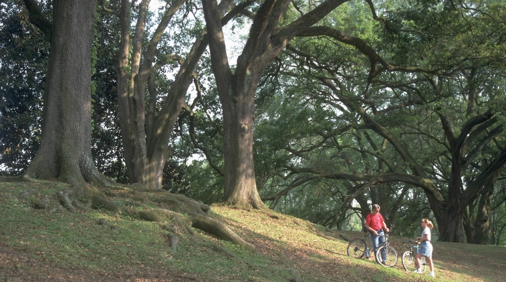 Baton Rouge featuring forests, cycling and a park