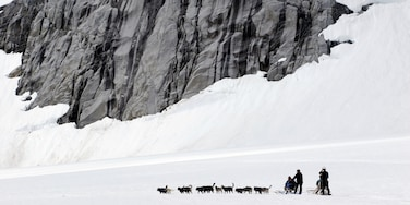 Juneau which includes landscape views, dog sledding and snow