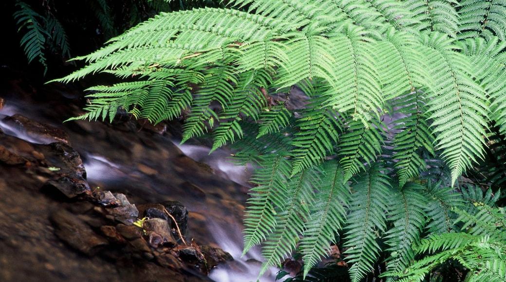 Manawatu-Wanganui welches beinhaltet Waldmotive und Stromschnellen