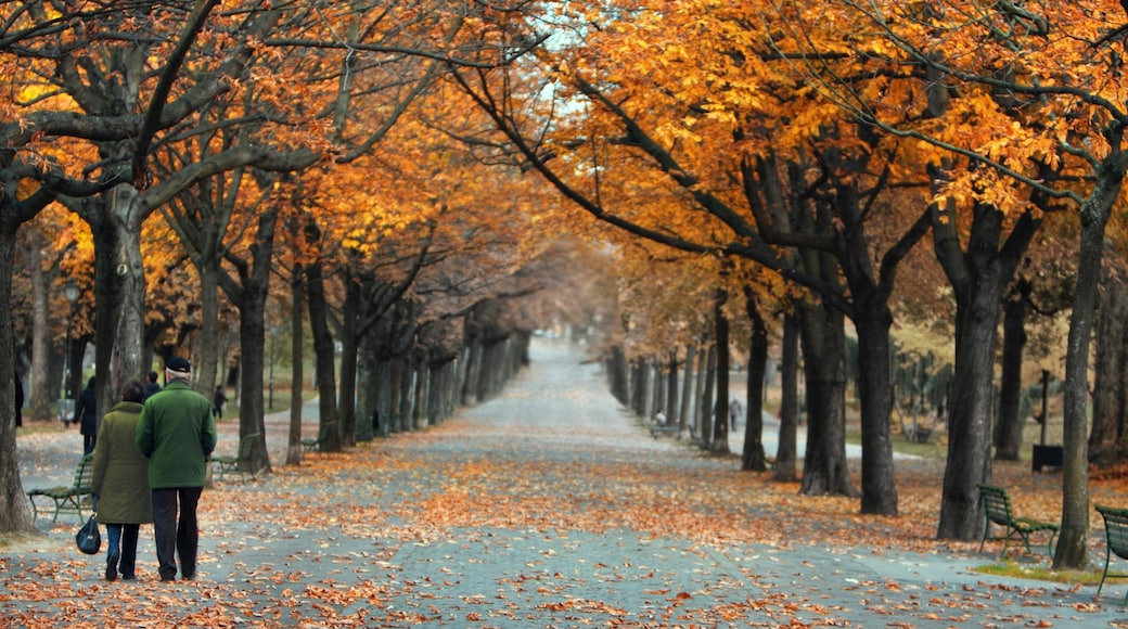Bastions Park featuring forests, a garden and autumn leaves