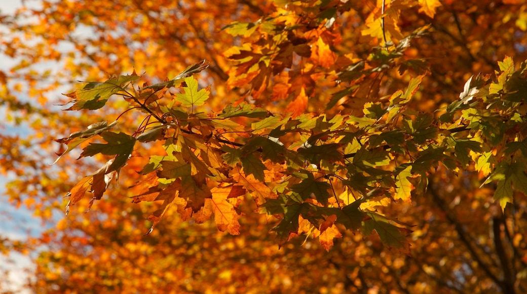 Millennium Park featuring autumn leaves and a park