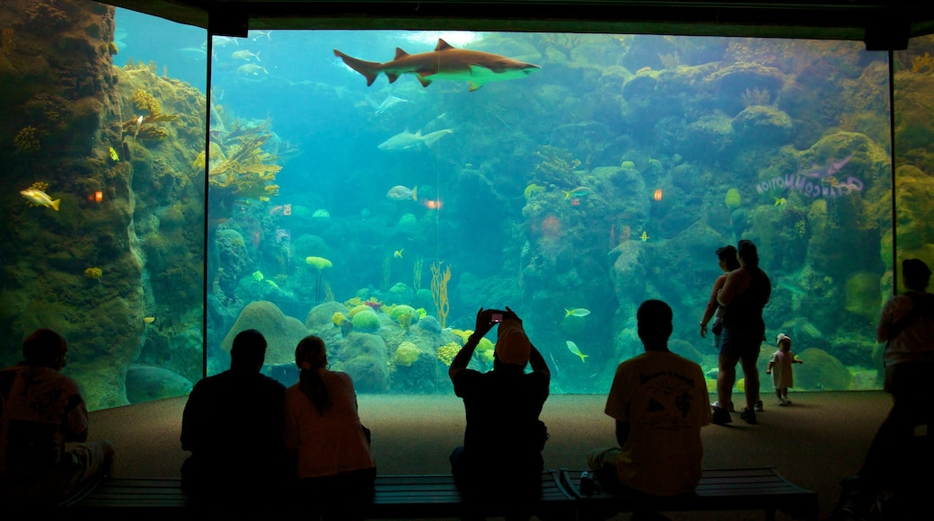 Tampa featuring marine life and interior views as well as a small group of people