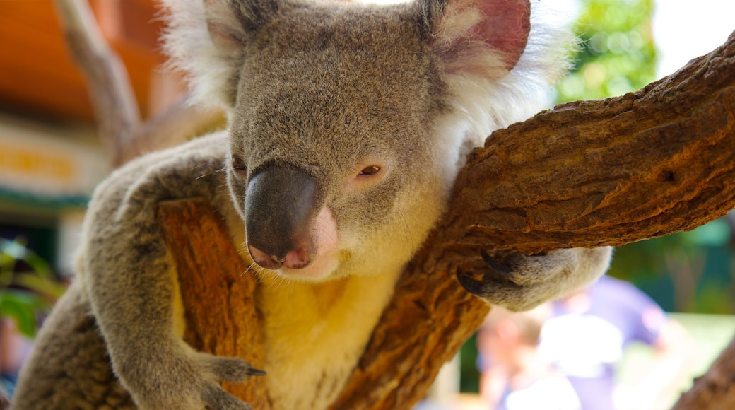 Sydney which includes zoo animals and cuddly or friendly animals