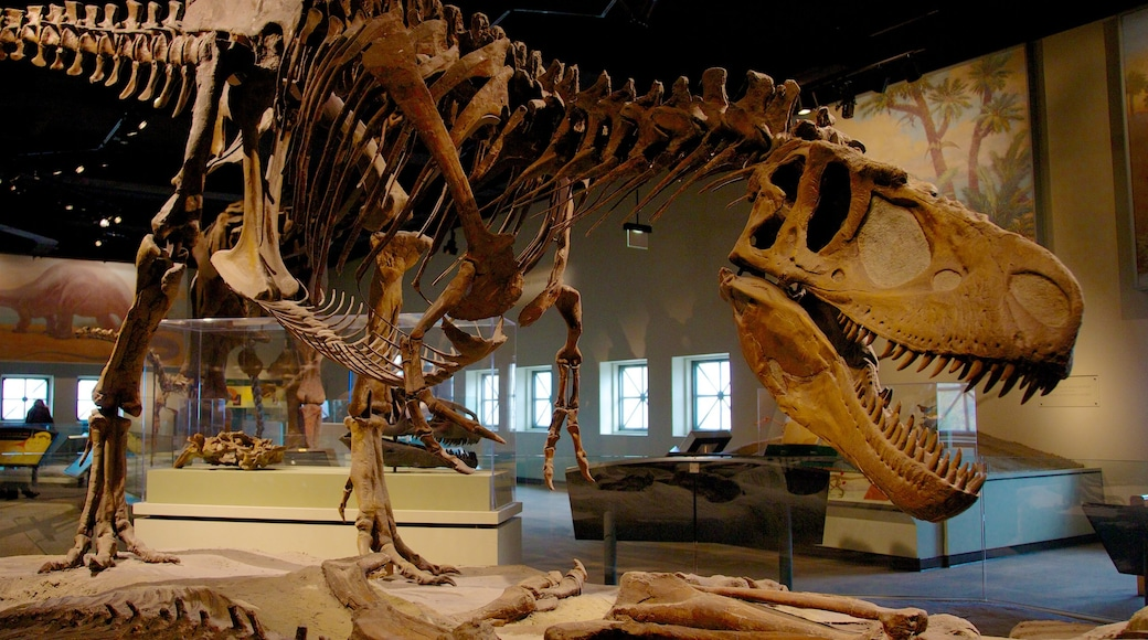 Field Museum of Natural History which includes interior views