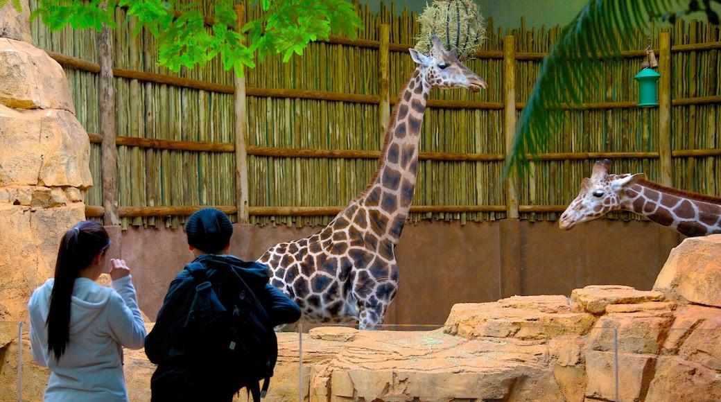 สวนสัตว์ลิงคอล์น แสดง สัตว์ในสวนสัตว์ และ สัตว์บก ตลอดจน คู่รัก