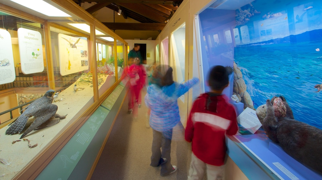 Pacific Grove Museum of Natural History showing interior views as well as children