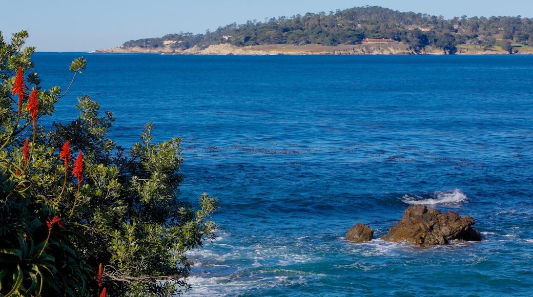 Carmel Beach caracterizando uma praia de areia, paisagem e cenas tropicais