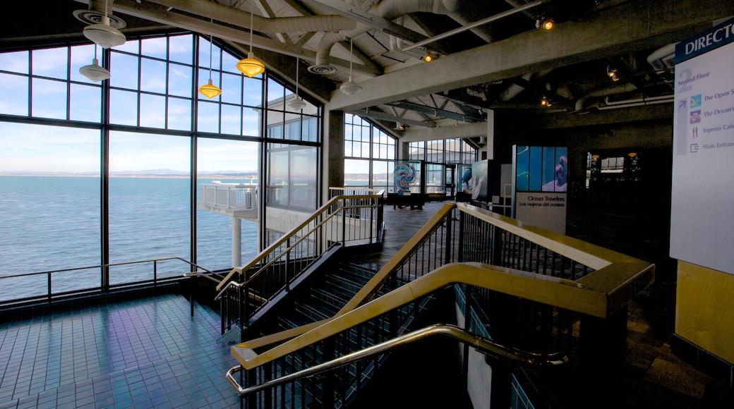 Monterey Bay Aquarium which includes marine life and interior views
