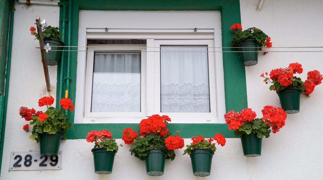 San Sebastián que incluye flores