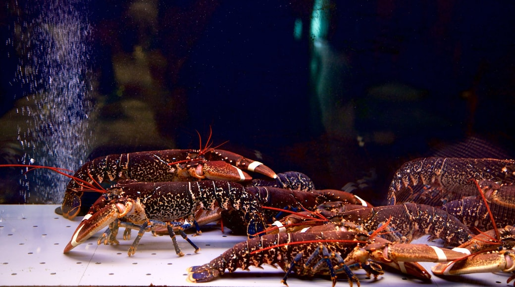 San Sebastián ofreciendo vida marina