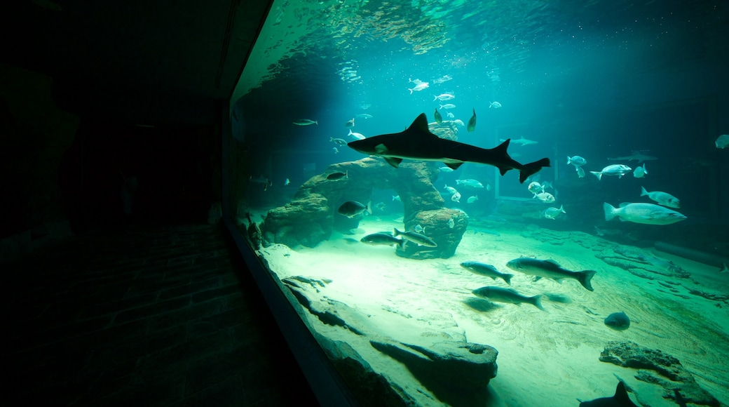 Cantabria Maritime Museum which includes marine life and interior views