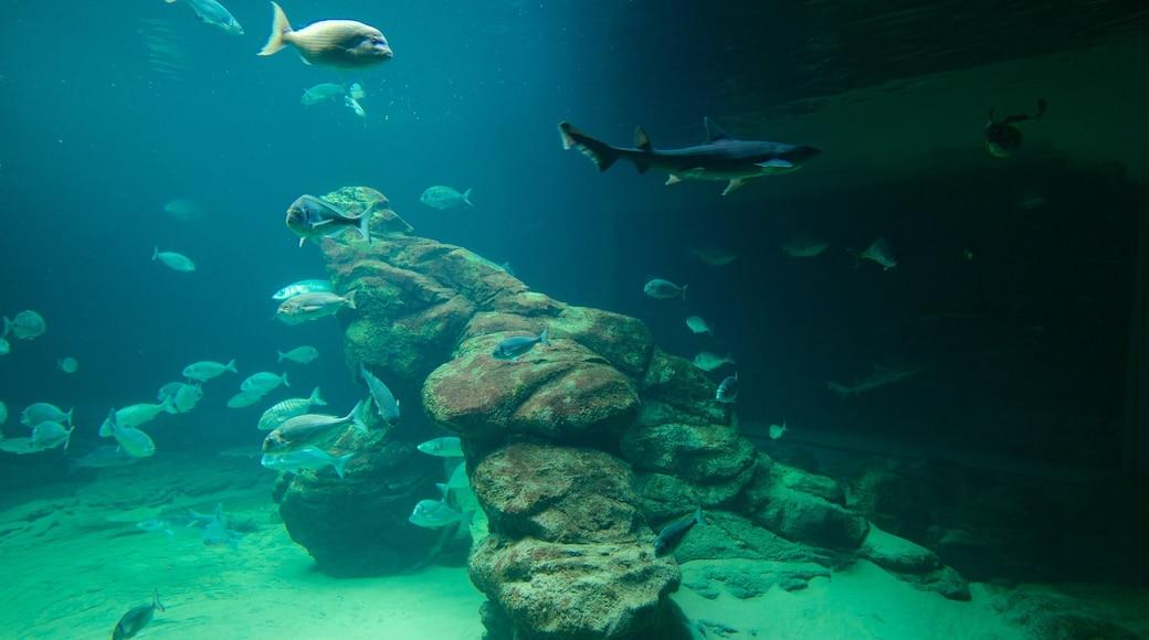 Museo marítimo de Cantabria que incluye vida marina y vistas de interior