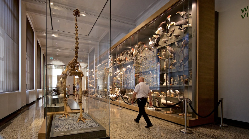 Hessisches Landesmuseum which includes interior views as well as an individual male