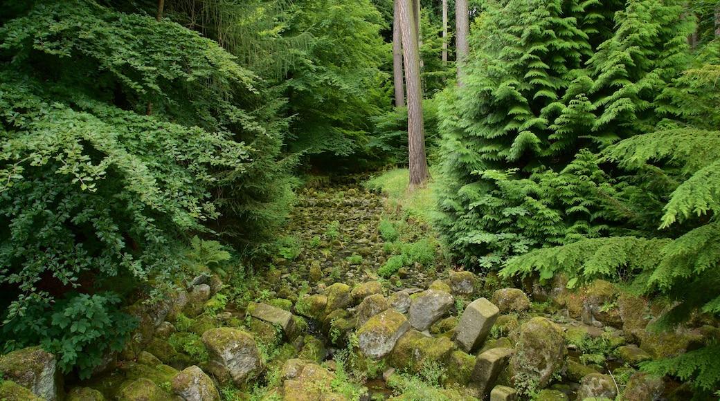 Bergpark Wilhelmshoehe mit einem Waldmotive und Park
