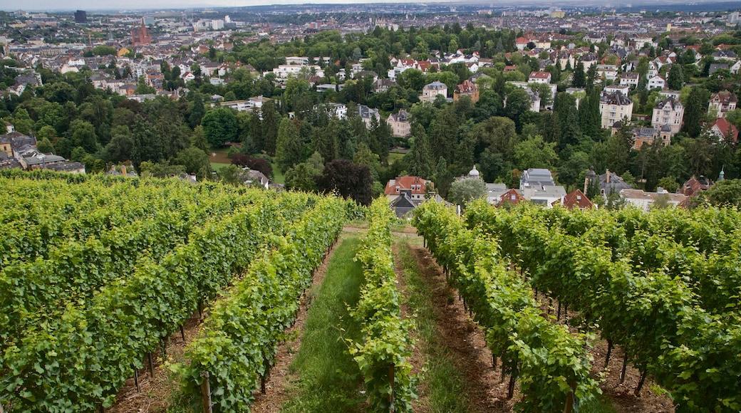 Neroberg mit einem Stadt, Farmland und Landschaften