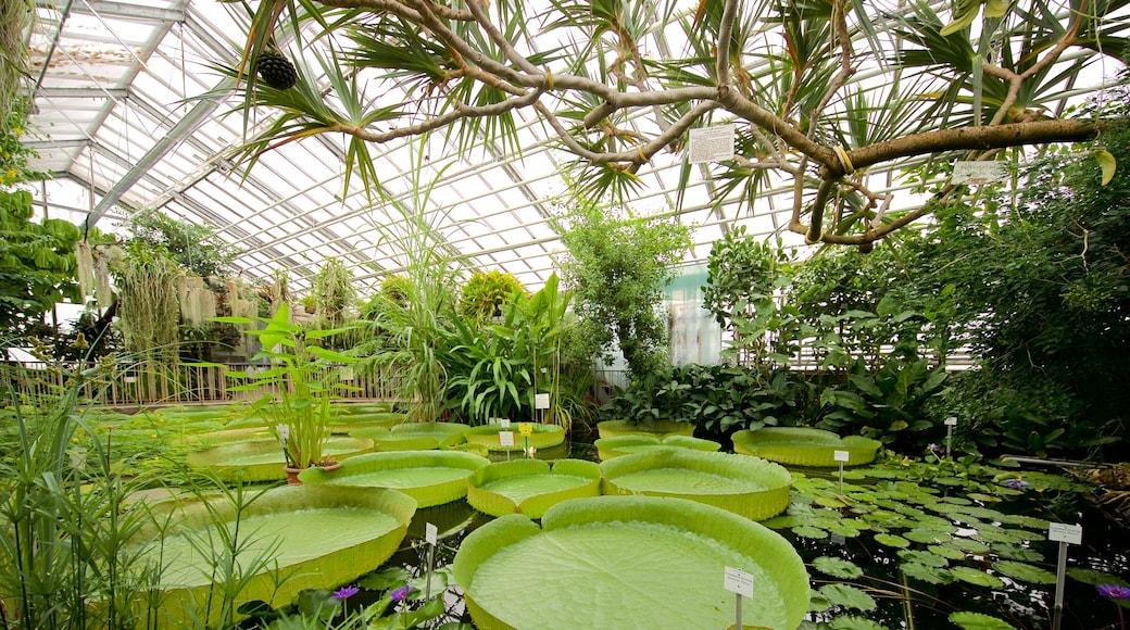 Botanischer Garten das einen Teich, Innenansichten und Park