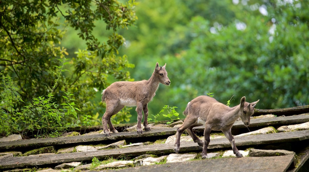 Heimat-Tierpark Olderdissen mit einem Waldmotive und niedliche oder freundliche Tiere
