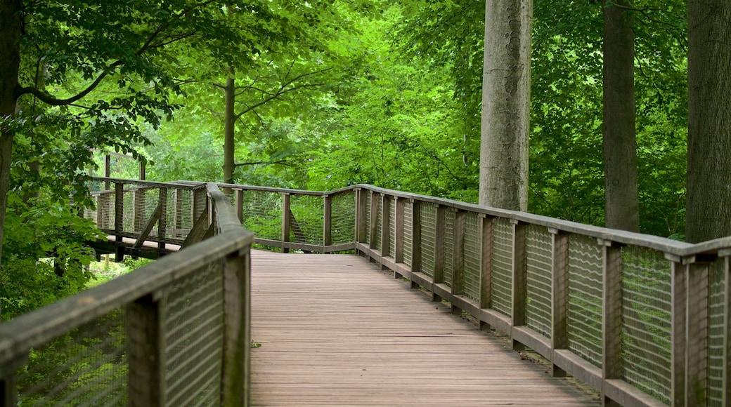 Heimat-Tierpark Olderdissen das einen Brücke und Waldmotive