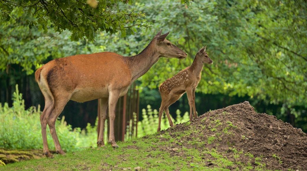 Heimat-Tierpark Olderdissen mit einem Landtiere, Zootiere und niedliche oder freundliche Tiere