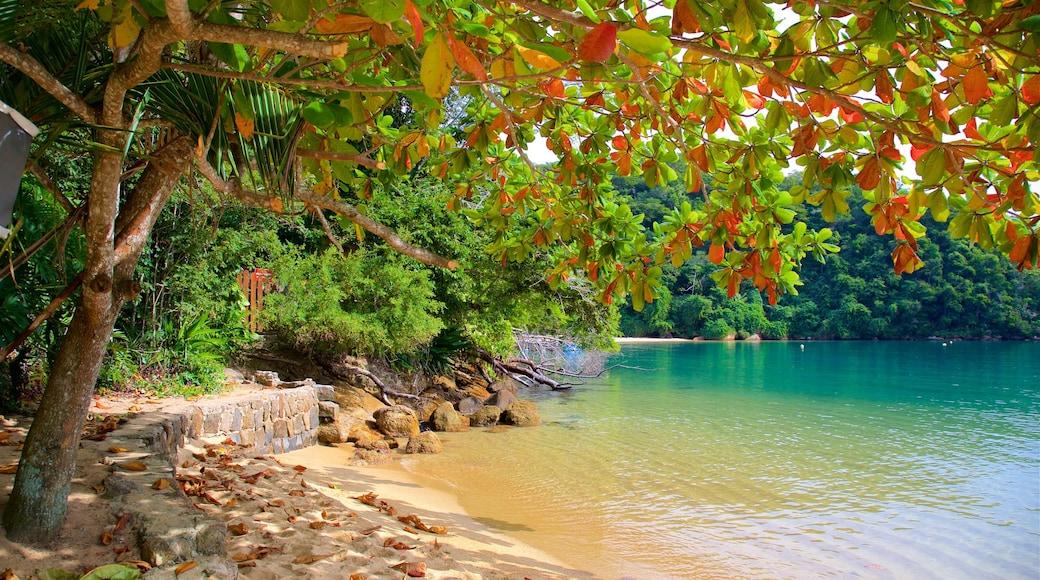 Strand von Abraaozinho mit einem tropische Szenerien, Sandstrand und allgemeine Küstenansicht