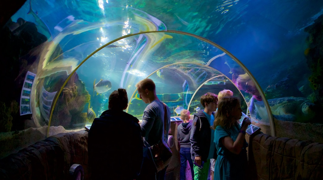 SEA LIFE Timmendorfer Strand which includes marine life and interior views as well as a small group of people