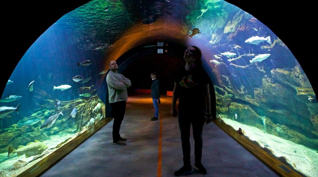 Ozeaneum montrant vie marine et vues intérieures aussi bien que petit groupe de personnes