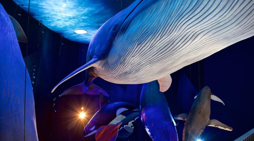 Ozeaneum mettant en vedette vie marine et vues intérieures
