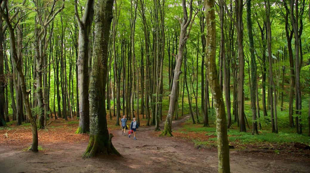 Parc national de Jasmund qui includes jardin, forêts et randonnée ou marche à pied