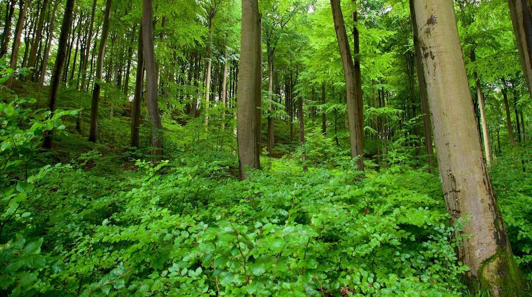 Parc national de Jasmund mettant en vedette forêts