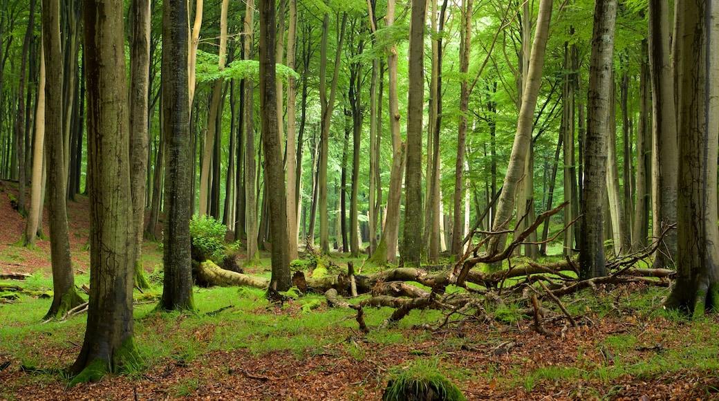 Jasmund nationalpark som inkluderar skogslandskap