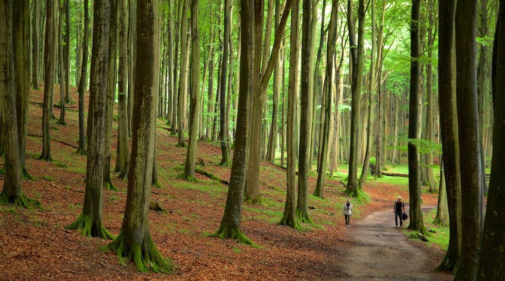 Parc national de Jasmund qui includes jardin, randonnée ou marche à pied et scènes forestières