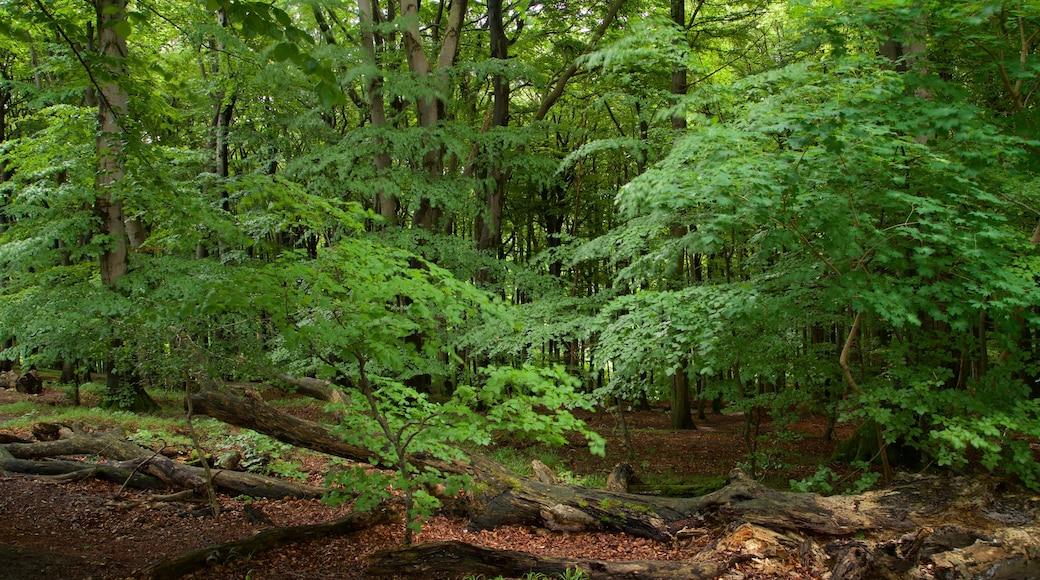 Nationalpark Jasmund mit einem Waldmotive