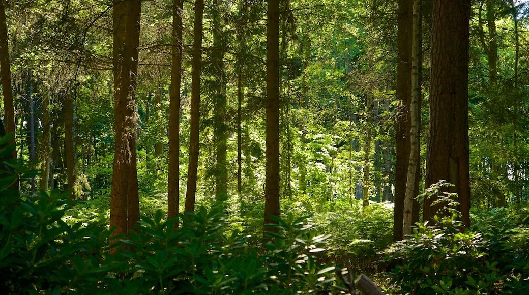 Graal-Müritz das einen Wälder