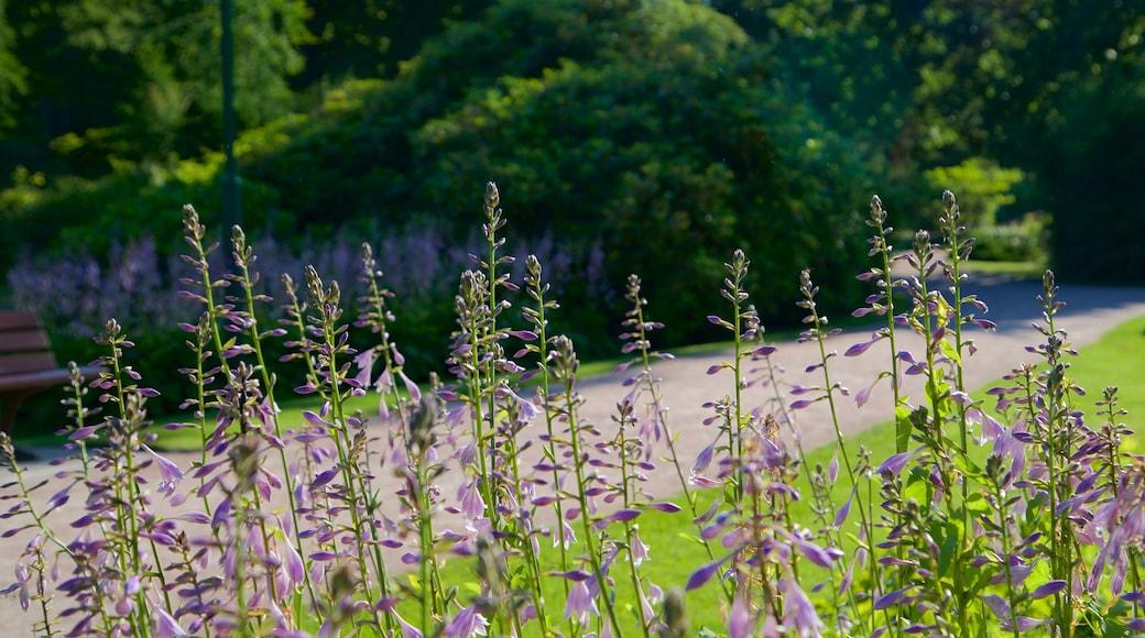 Graal-Müritz das einen Garten und Wildblumen