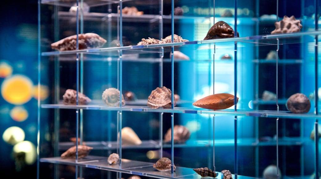 Ozeaneum montrant vues intérieures