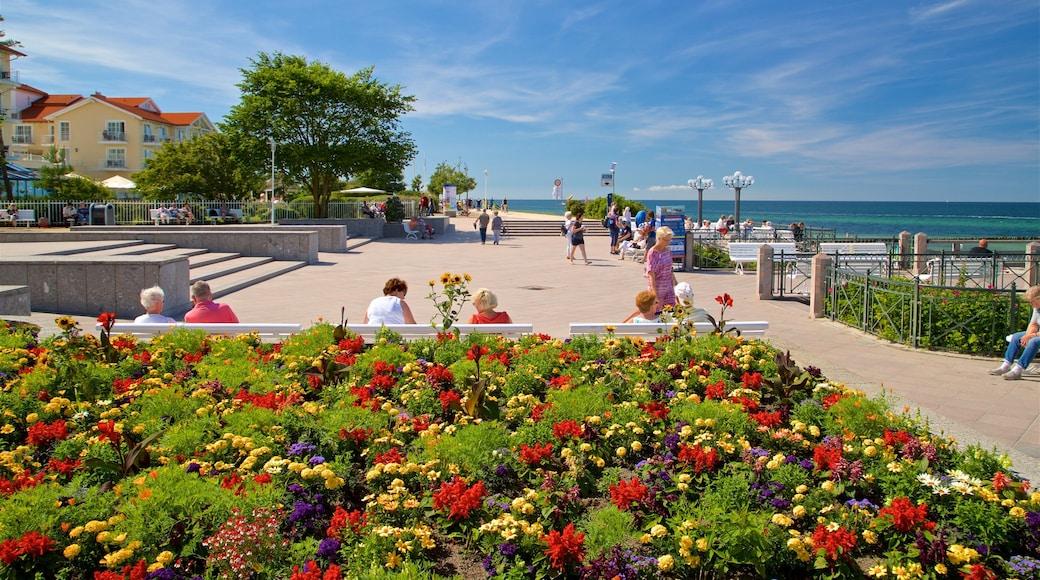Strand von Kühlungsborn das einen allgemeine Küstenansicht und Blumen sowie kleine Menschengruppe