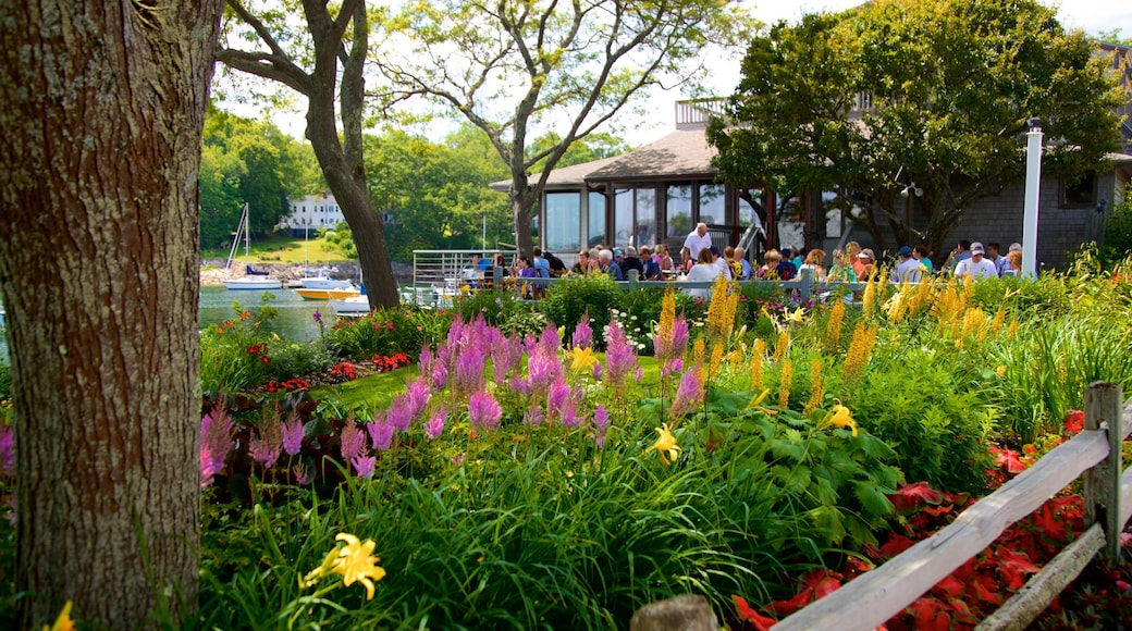 Perkins Cove featuring outdoor eating, wildflowers and a park