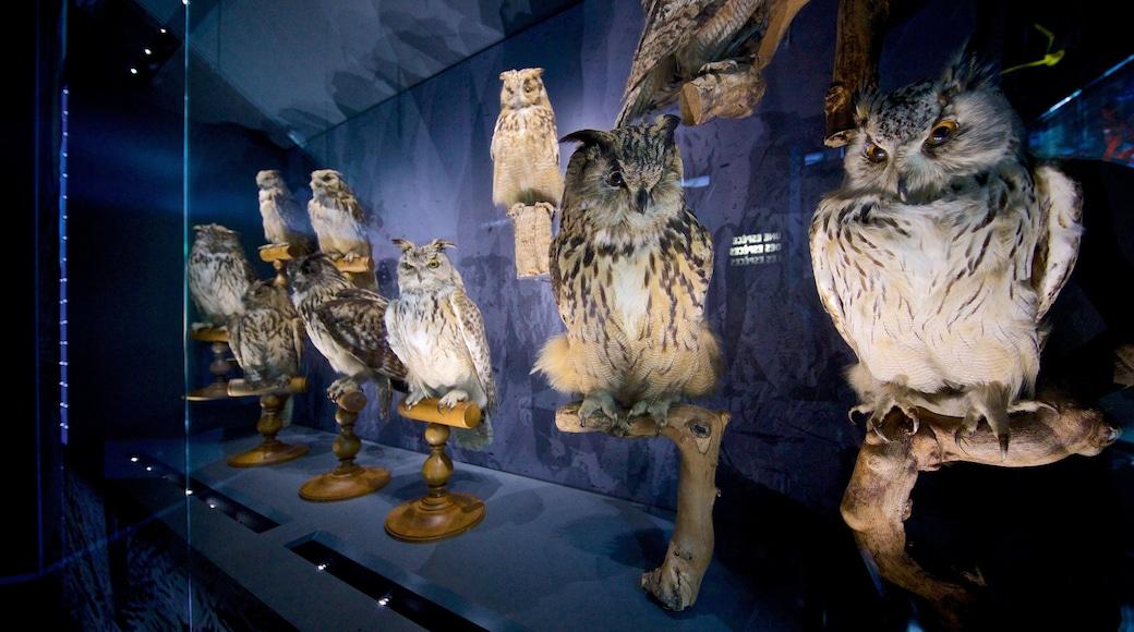 Muséum d\'histoire naturelle de Toulouse mettant en vedette vues intérieures
