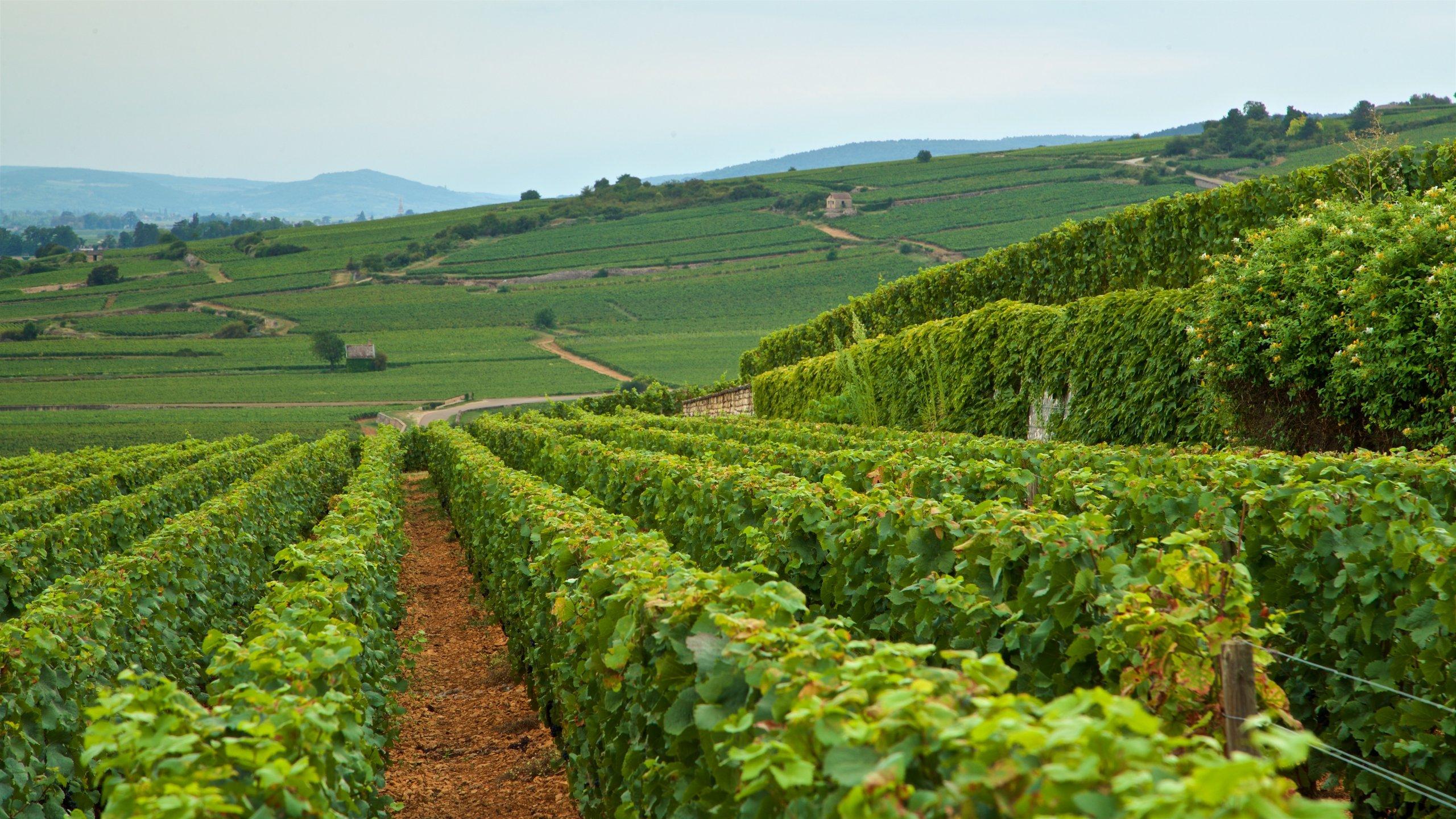 Bourgogne-Franche-Comte, France