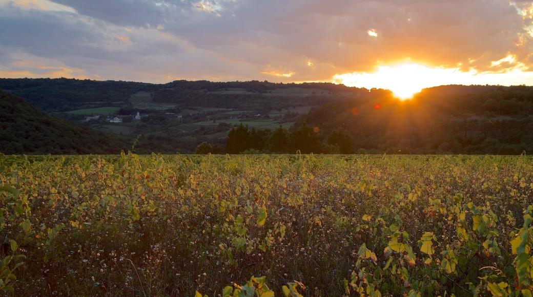 Beaune montrant scènes tranquilles, panoramas et coucher de soleil